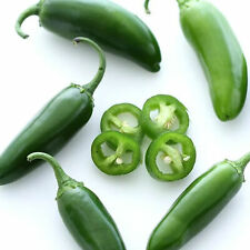 EARLY JALAPENO HOT PEPPER - 250 MG ~30 SEEDS - HEIRLOOM, NON-GMO, VEGETABLE