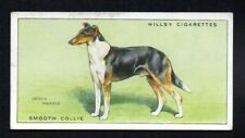 Smooth Collie 1937 Wills Cigarettes Tobacco Dogs Series #10 Vgex No Creases