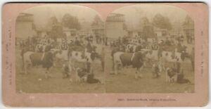"Pedigree Cows ""Blooded Stock - Atlanta Exposition"" Kilburn Animal Stereoview"