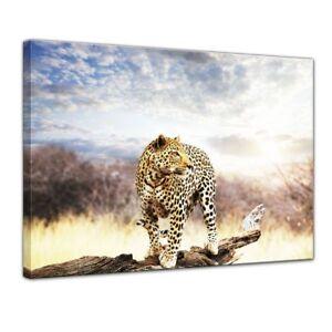 Marokko Gepard Kamel Leopard Dschungel Poster Druck Wandbild Leinwand Wandbild Wohnzimmer Wohnkultur 40x60cmNoFrame Picture1