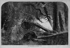 GREAT FIRE IN THE DISMAL SWAMP DEER BEAR OWL SNAKES BIRDS CRITTERS ANIMALS FLEE