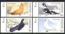 Moldova 2012 Pigeons/Birds/Nature/Pets/Sports/Racing 4v set (n37839)