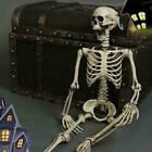 Oversized Poseable Full Life Size Human Skeleton Halloween Decoration Party Prop