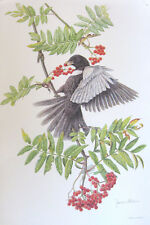 RING OUZEL Bird Print on 100 Cotton Paper Signed in Pencil by James Alder
