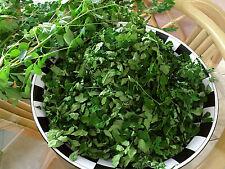 New From 2018 Organic Moringa leaves  113.40 grams  -  4 oz/ Flordia Grown
