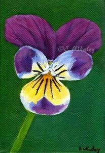 Pansy Art Flower Giclee 12x8 Inches Open Edition Print with COA