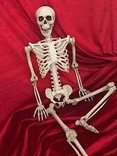 Menschliches Skelett Anatomie Lehrmodell / Halloween Deko 96cm H