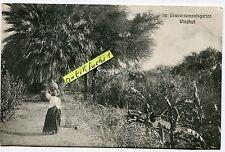 Postcard 1910: German South-West Africa, gouvernenentsgarten in Windhoek