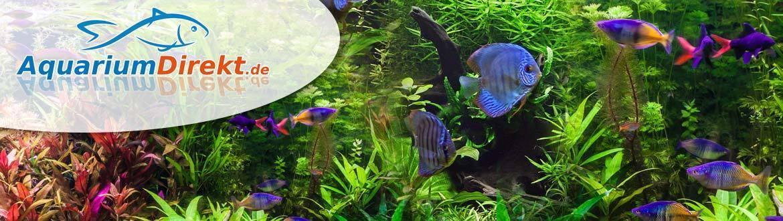 aquarium-direkt