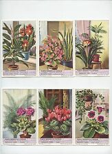 S1574.  ORNAMENTAL HOUSE PLANTS . PLANTES ORNEMENTALES D'INTERIEUR (1953)