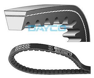 VEE belt 10mm x 1175mm Drive Fan Alternator Belt  OE Dayco 10A1175C