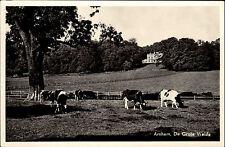 Arnhem Arnheim Niederlande s/w AK ~1950/60 De grote Weide Kühe auf der Weide