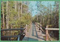 Vintage Postcard Georgia GA Okefenokee Swamp Park Waycross
