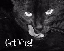 METAL MAGNET Image Of Black Cat Tongue Stuck Out Got Mice Humor Cats MAGNET