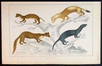 1830 Oliver Goldsmith Antique Print of Weasel, Ermine, Pine Martin, Vison