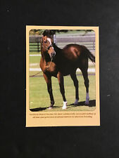 Northern Dancer photo Horse Racing Champion