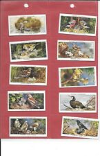 PLAYER'S - BIRDS & THEIR YOUNG  - 1937 - 10 CARDS - LOW NOS