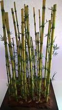 1/35 scala pianta modello - bambù Diorama kit accessori