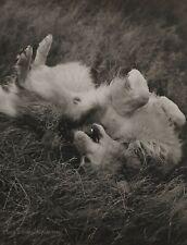 1989 Vintage BRUCE WEBER Golden Retriever Dog Adirondack Photo Gravure Art 11X14