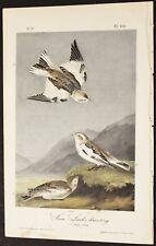 AUDUBON'S BIRDS of AMERICA -SNOW LARK BUNTING - First Edition Octavo plate 155