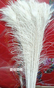 Wholesale! 10/50/100/200pcs Real white Peacock Tail Feathers about 10-36inches