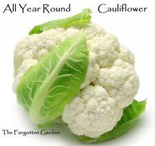 Cauliflower All Year Round Seed 25 Seeds Heirloom Garden Nutritious Vegetable
