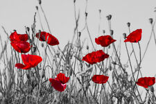 Red Poppies In Meadow Black And White Landscape Photo Poster 18x12