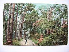 Aberystwyth, Cwm Woods. (Nr Tywyn, Barmouth etc - J & J Gibson)
