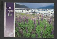 Colour Postcard Alaskan Wildflowers  Lupine unposted