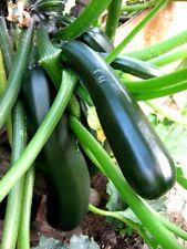 Kürbis Zucchini grün Black Beauty + Hokkaido je 10 Samen