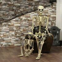 Halloween Props Plastic Human Skeleton Full Size Body Anatomy Model Decoration