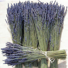 Natural Dried French Provence Fragrant Lavender Bunch Tied by Hand / 2x75 stems