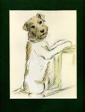 Lucy Dawson ~ Wire Haired Fox Terrier ~ Hand Coloured Print Genuine Vintage 1939