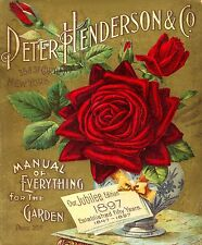 Botanical Poster Print Red Rose wall hangings home decor A4 Christmas ideas