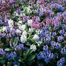 Wild Flower Hedgerow Flower Mix No Grass #1744 4g Seed Semi-Shade