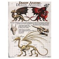 'DRAGON ANATOMY' CANVAS PLAQUE BY ANNE STOKES MYTHICAL MAGICAL DRAGON WALL ART