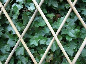 Rankgitter Rankhilfe aus Bambus