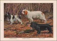 Cocker Spaniel, Clumber Spaniel, Field Spaniel Dogs by Fuertes, vintage 1919
