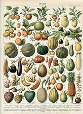 Fruits, exotic fruits, papaya, pineapple  Antique lithograph print.Larousse 1897