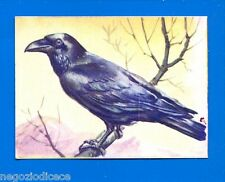 ANIMALI - Lampo 1964 - Figurina-Sticker n. 193 - CORVO -New