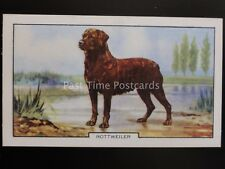 No.40 ROTTWEILER - Dogs - 2nd Series by Gallaher Ltd 1938