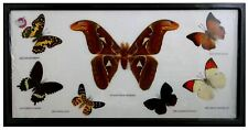 Butterfly and Moth-Assorted Insect Specimens: Set In Wood Frame 18.5x10