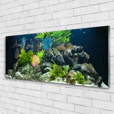 Glasbilder Wandbild Druck auf Glas 125x50 Fische Steine Blätter Natur