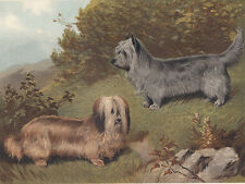 Early Skye Terrier Dogs Animals Pet Antique Dog Lithograph 1881