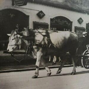 Germany Oberammargau Garmisch-Partenkirchen Bavaria Photo Horse 1930s Photo A213