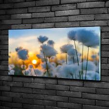 Glas-Bild Wandbilder Druck auf Glas 100x50 Deko Blumen & Pflanzen Wollgras
