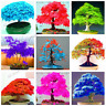 50 PCS Seeds Mini Mixed Colors Japanese Maple Tree Bonsai Plants Home Garden New