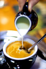 Louisiana Cafe Creole - 5 Pounds Fresh Roasted Coffee