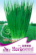 1 Pack 100 Chive Seeds Shallot Scallion Organic D012