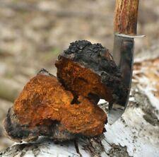 10kg Wild Siberian CHAGA Mushroom Dried Chunks for Tea, Certified Select Product